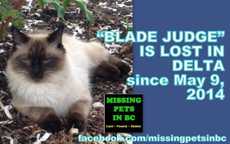 blade judge lost himilayan in delta
