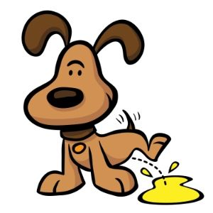 Tips to help you collect your dog's urine sample for a visit to the vet. Urine analysis is important in diagnosing and maintaining your dog's health.