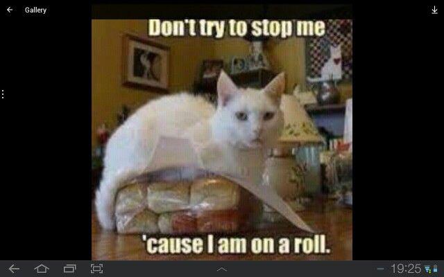 U go cat