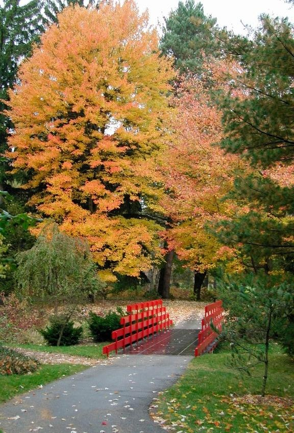Dow Gardens- Red bridge in the fall!