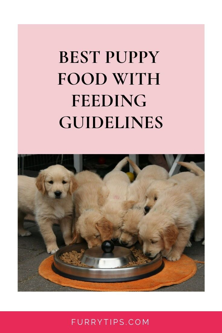 Best Puppy Food With Feeding Guidelines Puppies Need Feeding