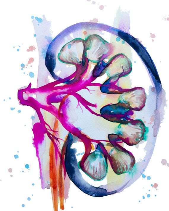 ➤ This is a Giclée fine art print of one of my original watercolor paintings. I painted this bright and bold watercolor painting of a kidney