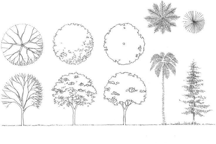 Como diseñar arboles para paisajismo y arquitectura