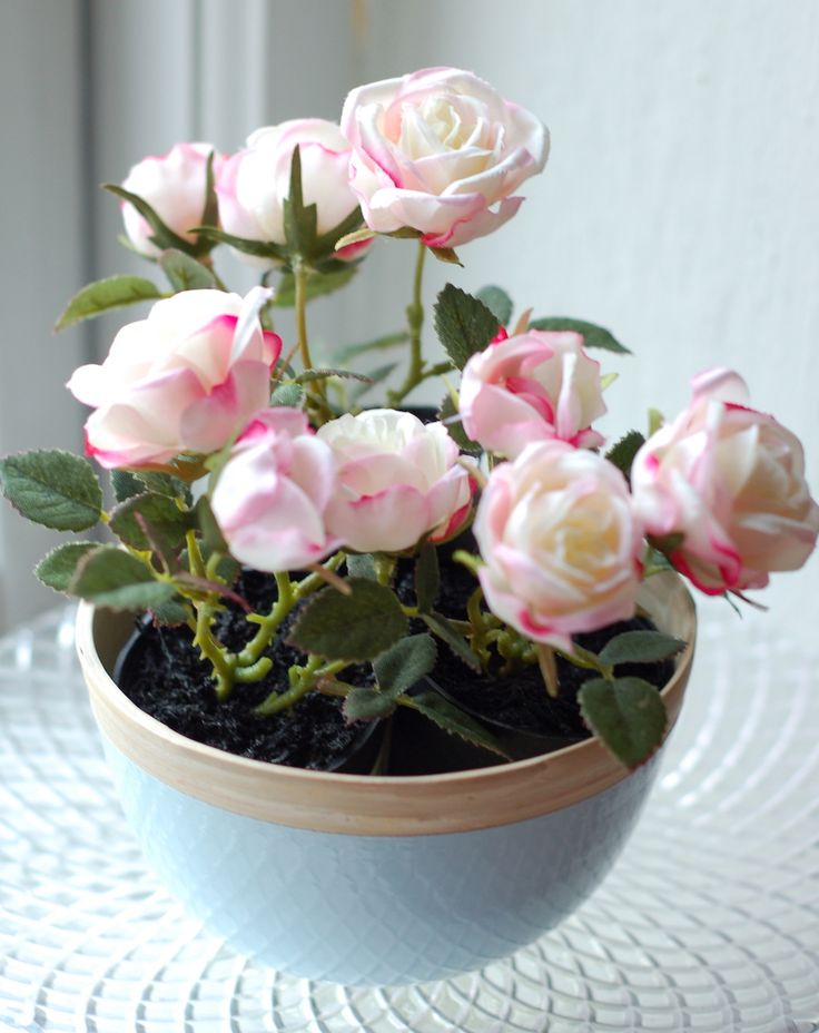 pretty pink mini roses in pastel blue wooden bowl