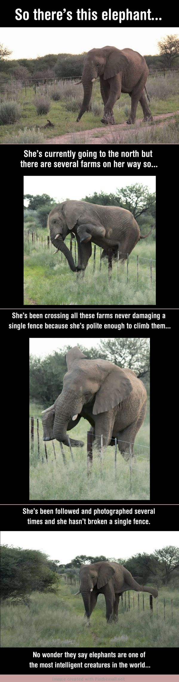 So there's this elephant.