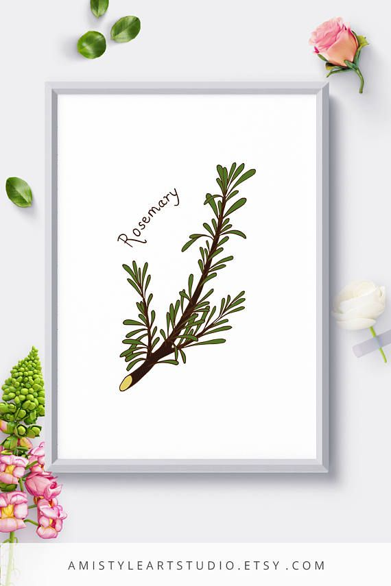 Kitchen Art Print - Rosemary - printable herbs kitchen decor with a hand drawn botanical herb.This herb print is perfect as a gift for her or a houswarming gift. By Amistyle Art Studio on Etsy