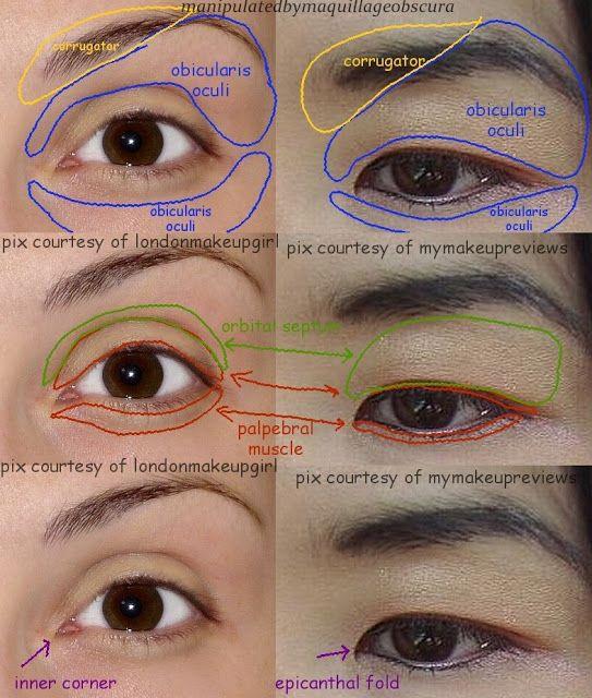 Asian and Caucasian eye anatomy