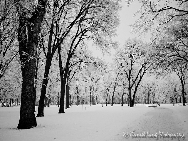 Trees in Winter - Moorhead, Minnesota 2012 | Places ... Pictures Trees In Winter Pinterest