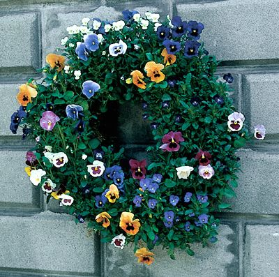 LIVING WREATH FORM with pansies