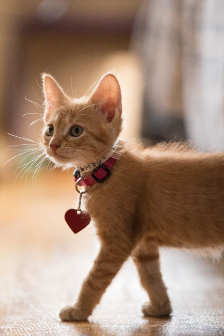 Four Effective Strategies to Adopt Out Foster Kittens in