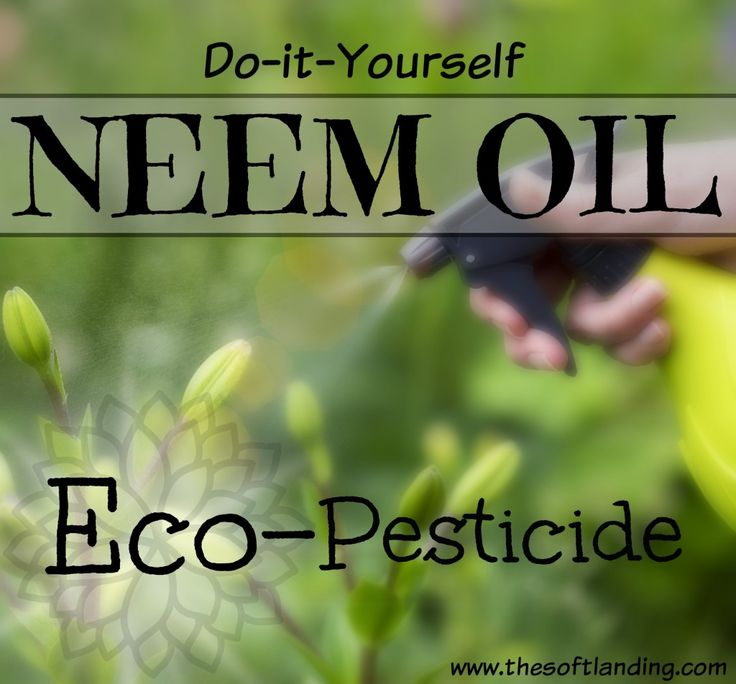 HELP! My garden is under attack! The aphids, inch worms and pill bugs are back, hacking away at my beautiful garden. Neem oil eco-pesticide to the rescue!