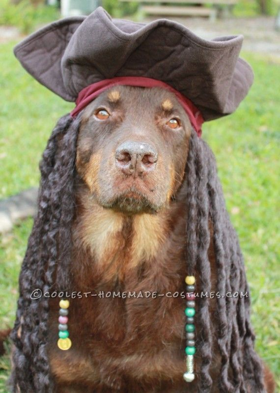Best Homemade Dog Pirate Costume ...This website is the Pinterest of birthday cakes