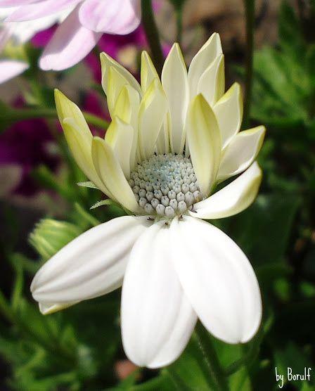 Like a Flower - A Garden Flower showing off her pretties