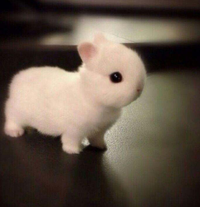 too much cuteness! ♥