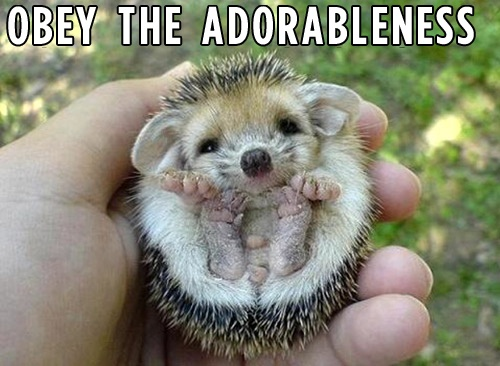 BuzzFeed Animals started a new pinterest! Follow for cute: http://www.pinterest.com/buzzfeedanimals