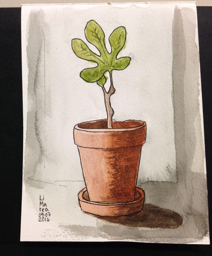 Fig plant, watercolour