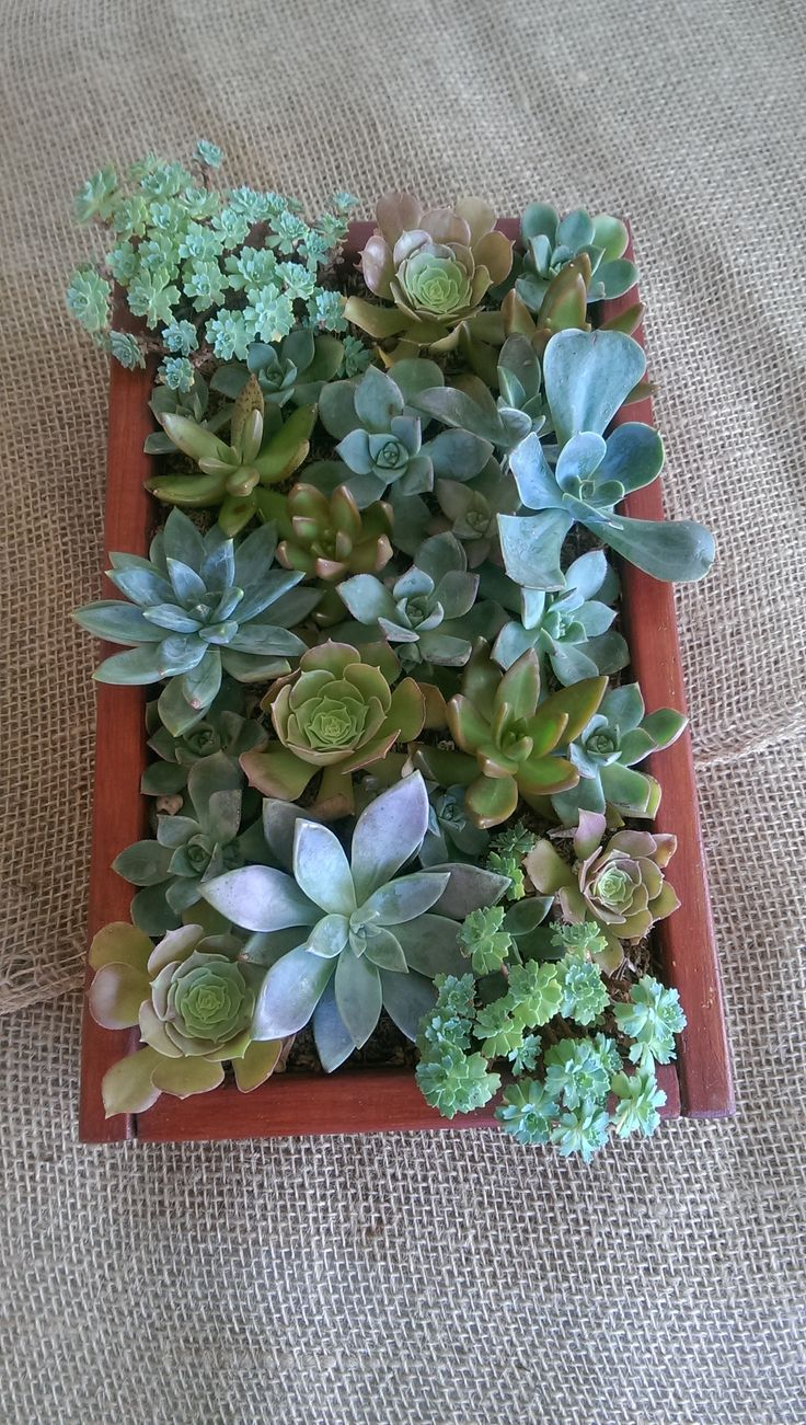 Succulents of San Diego. Succulents gifts are great for weddings ...