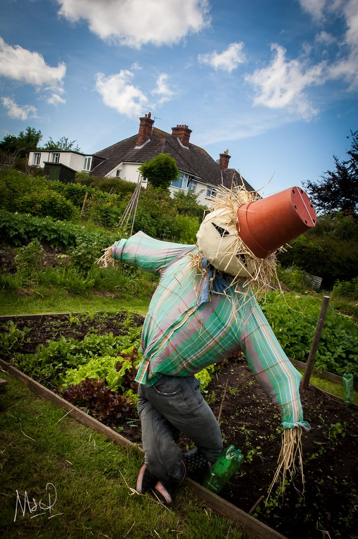 In the Summer sun and scarecrow doing his just at a Exmoor garden  For more images from Exmoor by Mark www.exmoor.photography