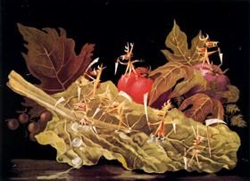 Amoebiasis or vegetables - Remedios Varo