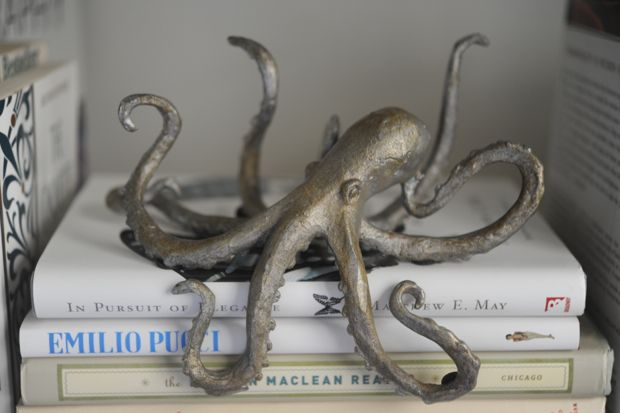 octopus >> Love this!