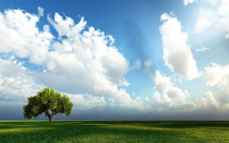 небо дерево поле трава