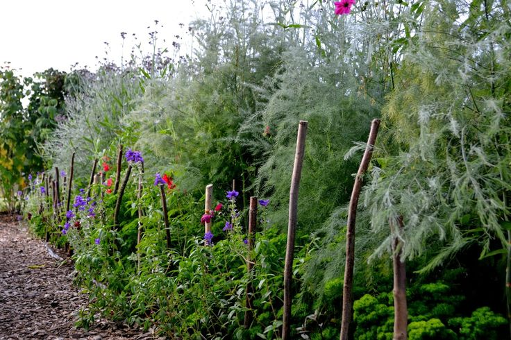 A flowering asparagus bed. http://skillnadenstradgard.blogspot.se/2014/12/lat-det-blomma.html #trädgård #odla #garden #vegetables