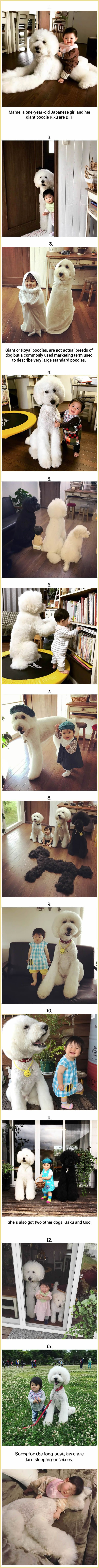 Cute Toddler And Fluffy Giant Dogs Make The Most Perfect Squad