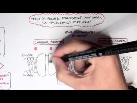 ▶ (Passive) Diffusion - Simple and Facilitated - YouTube