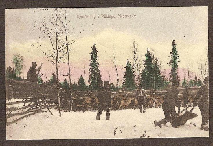Renräkning i Pålänge  Kalix Postgånget 1906