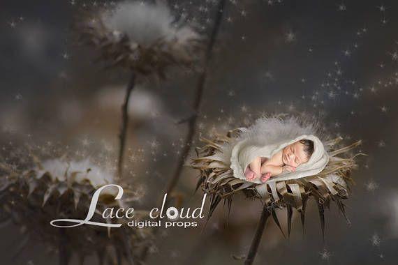 Digital Backdrop prop Newborn background Cotton flowers boy