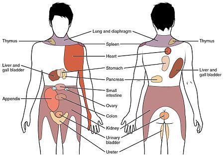 Referred Pain Chart