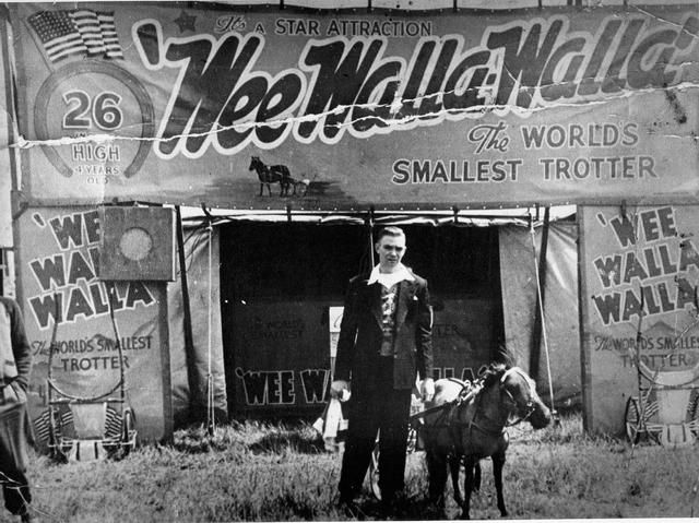 'Harold Wedlock's step-son, Johnny Willoughby with 'Wee Walla Walla-The World's Smallest Trotter'. 'He was a fair dinkum trotter and he was a miniature one, he never grew. They give him hormone tablets to stop him from growing.' (Harold Wedlock). Johnny Willoughby died at 24 when he was shot near the Cherry Tree hotel, South Richmond in the 1960s. ' Collection: Yarra Libraries, Australia