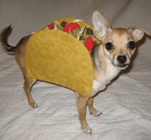 Mexican Food..  kkkHalloweencostumes, Funny Pets, Halloween Costumes Ideas, Chihuahuas, Mr. Tacos, Dogs Costumes, Funny Halloween Costumes, Tacos Belle, Pets Costumes