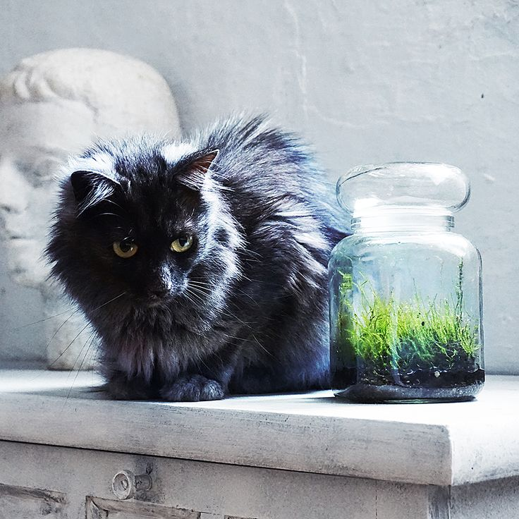 Our cat Murmur.      🖤 🖤 🖤
