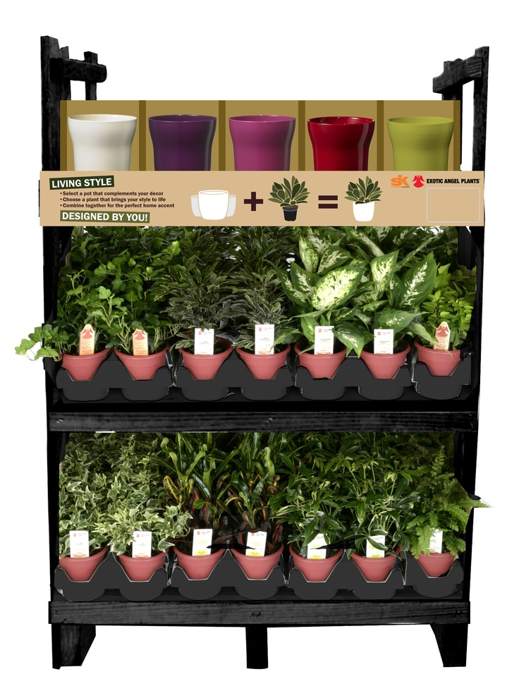 """The 5"""" Orlando Mix & Match rack has everything you need to create a personalized home decor statement piece.  The fun bright colors of the Orlando pot pairs perfectly with the lush tropical foliage that Exotic Angel Plants has perfected."""