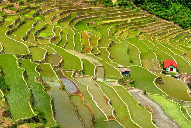 Les Rizières de Banaue aux Philippines : 30 merveilles les plus isolées du monde - Linternaute