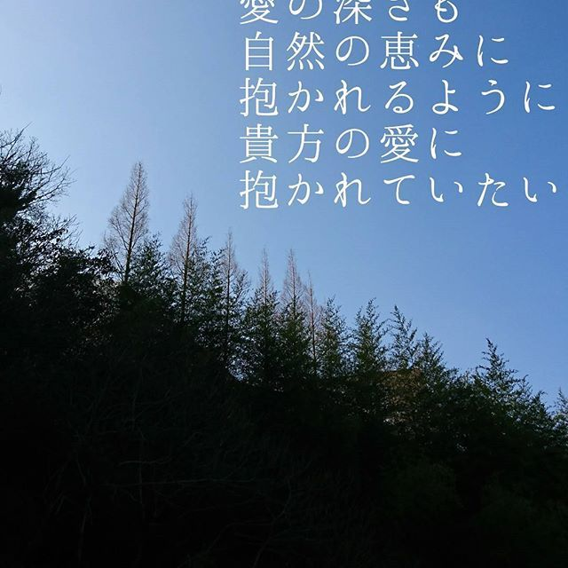 【sachito_k】さんのInstagramをピンしています。 《The depth of the forest is also The depth of love is also To nature's blessing To be embraced In your love I want to be embraced  森の深さも 愛の深さも 自然の恵みに 抱かれるように 貴方の愛に 抱かれていたい  #詩 #詩作 #photooftheday #photography #poem #poems #follow #followme #like4like #instagood #tagforlikes #follow4follow #フォロー #フォロバ #フォロワー #フォローミー #いいね #好き #空 #beautiful #cool #ありがとう #きれい #森 #forest》