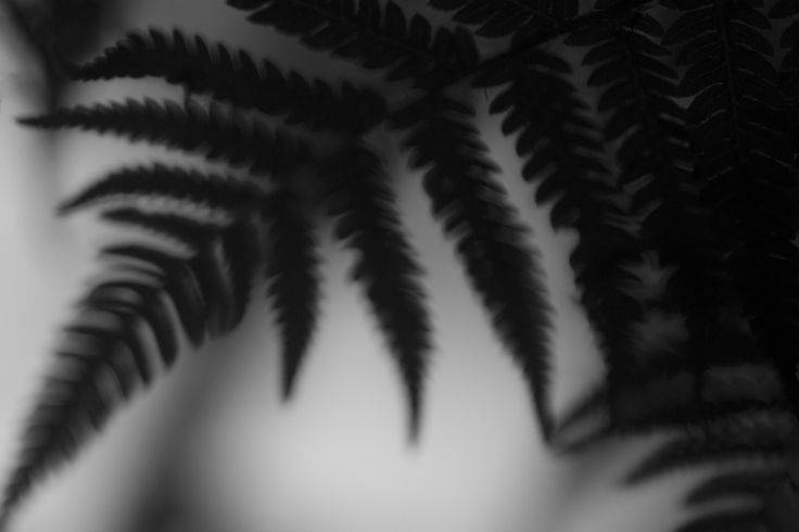 New Zealand – Episode 8 – The ferns of NZ