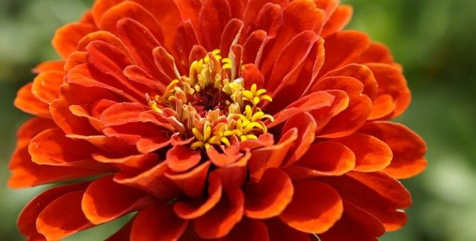 Hanakotoba - Language of Flowers