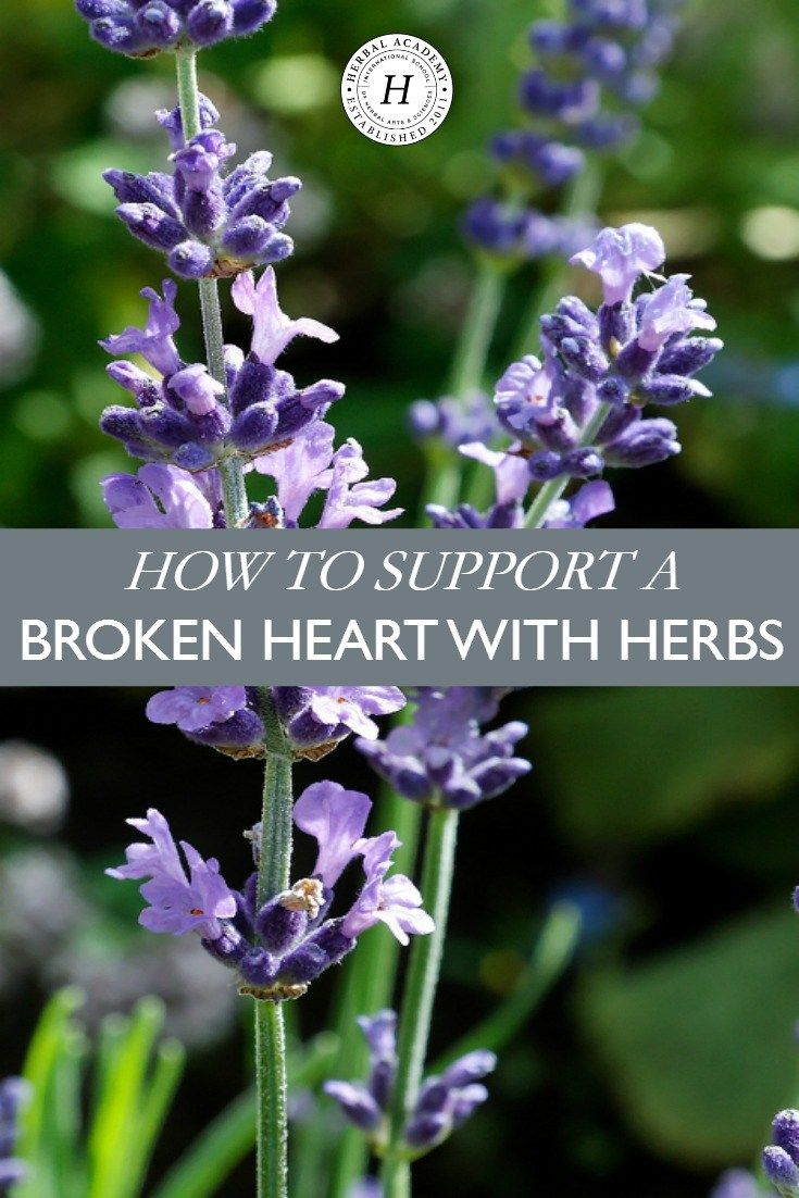 How To Support A Broken Heart With Herbs | Herbal Academy | Support a broken heart with these herbs that calm, uplift, and nourish the body! (Affiliate)