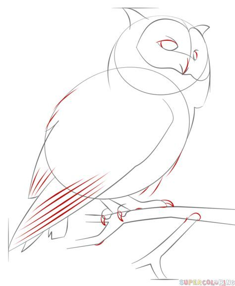 How to draw a realistic owl | Step by step Drawing tutorials