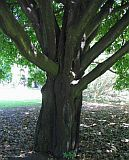 Парфюмерная нота эбеновое дерево подробнее / more info: http://www.imagine-parfum.ru/note_info.php?id=551&main_razdel=aroma_notes