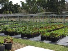 Buckingham Farms is a hydroponic farm that covers more than 50 acres in Fort Myers.