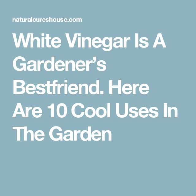 White Vinegar Is A Gardener's Bestfriend. Here Are 10 Cool Uses In The Garden