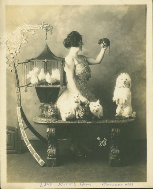 Lady Alice's Pets 1920: Photos, Alice'S Pets, Lady Alice'S, Vintage, Moody Studios, Pets Stores, 1920S Needs, Lady Alice Pets, Animal