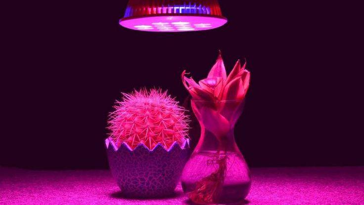 Grow Light For Plants TaoTronics Grow Light Review, Led vegetation lights, Best…