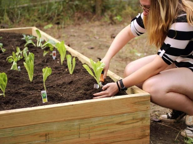 Learn how to build a budget-friendly raised garden bed with step-by-step instructions from HGTV Gardens.