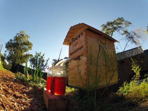 Кампания по сбору средств на производство пчелиного улья нового типа оказалась невероятно успешной. За месяц привлечено около четырёх миллионов долларов, при этом скорость набора первого и второго миллионов была рекордной для Indiegogo. Успех закономерен — изобретатели предложили конструкцию, значительно упростившую процесс сбора мёда.