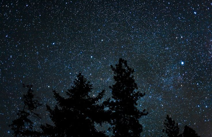 night sky with coniferous trees