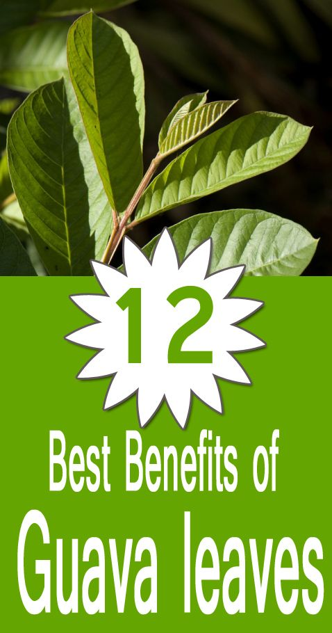 """All of us know how healthy and beneficial is the fruit """"guava"""" for us but many of us are still unaware of the benefits of the leaves of this fruit. Guava leaves as has antibacterial, antioxidants and anti-inflammatory agents, is often used as pain reliever."""